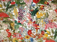 Fibre Naturelle Chelsea Profusion floral cotton print upholstery fabric <br />We recommend a sample of this fabric if colour is important to you as colours on different screens may vary.