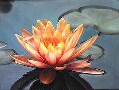 Every Lotus starts in the mud and rises to the surface, we have to make the choices to float to the top. Choose wisely.