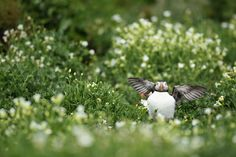 They are really cute! | 12 Reasons Why Puffins Are The Best Birds On Earth