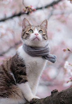 Cat knows how to wear a scarf.