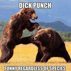 LOL #funny #animal #meme