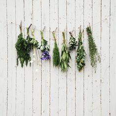 Se soigner par les plantes: 9 gestes à adopter au quotidien - How to hill yourself with plants