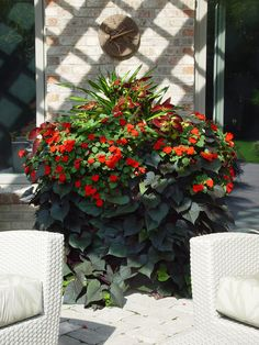 orange impatiens and black sweet potato vine
