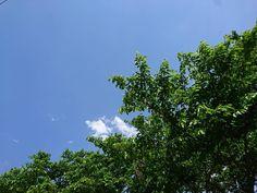 いつの間にか新緑の季節になりましたね そして連休が終わる サザエさんサザエさん