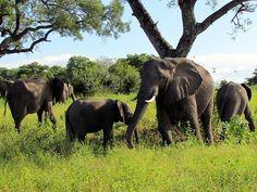 World's Largest Wildlife Conservation Area Established in Africa