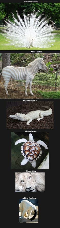 Albino animals....wtf at the end??