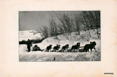 Antique 1907  Photo Illustration of Husky Dog Sled Team