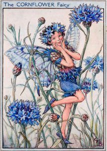 Cornflower flower fairies Theme Forest, Fairy Drawings, Fable, Fairy Pictures, Vintage Fairies, Fairytale Art, Beautiful Fairies, Flower Fairies, Illustrations