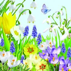 Ambiente,  Flowers - tulips,  Flowers - other,  Flowers,  Spring,  lunchnapkins,  flowers,  tulips,  primroses