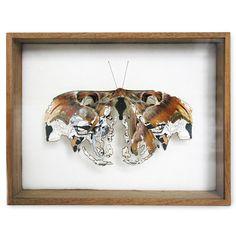 broken butterflies by Anne Ten Butterfly Tree, Butterflies, Atlas Moth, Grunge, Asia Map, Creative Artwork, Dutch Artists, Trends, Art Themes
