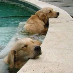 Cuties lounging in a pool