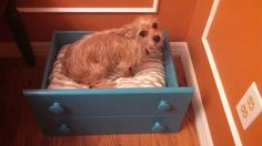 Old dresser drawer repurposed to a dog bed