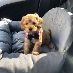 Kathleen loved their purchase from AnnaHappydog Bed Size Charts, Personalized Dog Beds, Blue Couches, Toy Basket, Tufted Bed, Dog Car Seats, Animal Design, Dog Gifts, Dog Toys