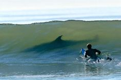 squali tra i surfisti  http://www.uniquevisitor.it/magazine/squali-foto-video.php