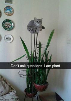 Cat, Kitten, Felidae, Cat Food, Dog, Meow, Funny animal: Don't ask questions. I am plant