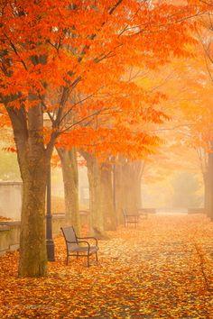 ~~Foggy Fall Morning - Princeton, New Jersey by yuko kudos~~