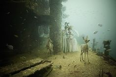 unusual underwater photo exhibit