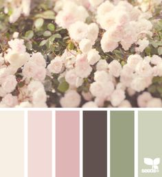 36 ideas for shabby chic colors scheme design seeds Design Seeds, Colour Pallette, Color Combos, Shabby Chic Colors, Color Schemes Design, World Of Color, Color Swatches, My New Room, Color Theory
