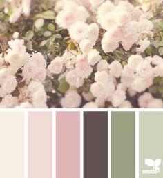 flora dream