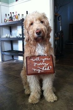 """Check out these adorable marriage proposal ideas that involve pets and animals! These sweet proposal pictures are sure to make you say """"aww! Dog Wedding, Dream Wedding, Wedding Day, Wedding Dress, Wedding Attire, Wedding Ceremony, Wedding Proposals, Marriage Proposals, Dog Marriage"""
