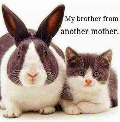 coniglio e gattino...