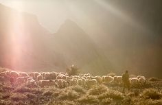 """Shepherd bringing back his herd in the evening - Upper Mustang, Nepal"" // Beautiful lighting, it must have been a pleasant evening to take the sheep home. Maybe a half hour walk out of the mountains down to the family farm? Who knows, but it looks stunning."