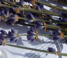 Deborah Lawrenson: lavender sugar and biscuits