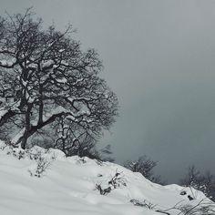 Hacia #peñaBoya #pesaguero #liebana #cantabria #spain #landscapes #nature #naturaleza #oak #trees #arboles #robles #quercus #nieve #snow #winter #invierno #sky
