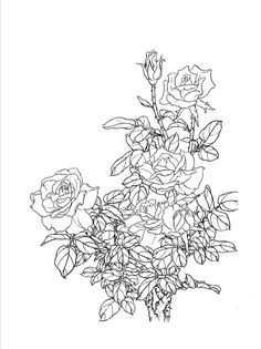 Flower Line Drawings, Flower Sketches, Drawing Sketches, Pencil Drawings, Art Drawings, Flower Mural, Flower Art, Chinese Painting, Chinese Art