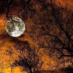 ~good night beautiful full moon~