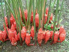 botanical001_large_hawaii.jpg