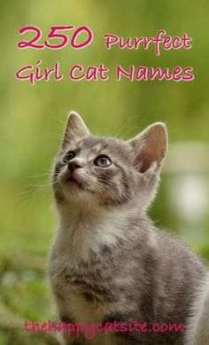flirting signs for girls names female black cats