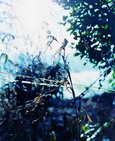 © Natsuko Zanma