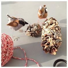 Winter Bird Feeder................ Vögel füttern im Winter