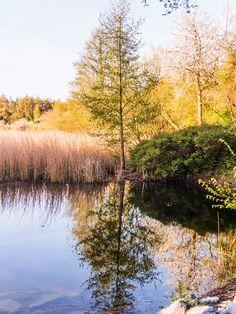 Mein Fotoblog: Frühling am Mühlenteich