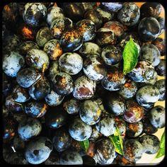 Homegrown plums. Yummy.  #soultravels #outdoorgirl #adventuregirl #mindful #munichandthemountains