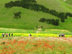Italy, Umbria, Norcia - Piana di Castelluccio -by Gianni Del Bufalo (CC BY-NC-SA) by gianni del bufalo