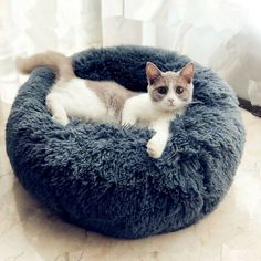 Round Plush Cat Bed Pet House Soft Long Plush Cat Mat Round Dog Bed For Small Dogs Cats Nest Winter Warm Sleeping Bed Puppy Mat Features: Bed can be Machine Washed or Hand Washed,You can Take… Cheap Cat Beds, Best Pet Dogs, Heated Pet Beds, Round Dog Bed, Fluffy Bedding, Dog Beds For Small Dogs, Large Dogs, Small Cat, Cat Mat