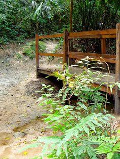 Bridge at Tayrona National Park (Colombia)