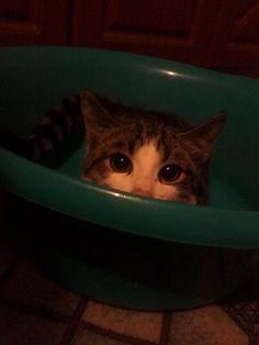 Повелитель тазиков #cat #kitty #animal