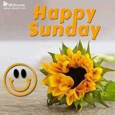 Free photo: Flower, Blossom, Sunflower, Bright - Free Image on Pixabay - 629674 Iris Flowers, Flowers Nature, Yellow Flowers, Colorful Flowers, Flower Petals, Spring Flowers, Beautiful Flowers, Organic Gardening, Gardening Tips
