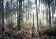 9 Best Forests images in 2018 | Thetford forest, Woodland