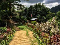 EXPLORING THE TRANQUIL LANDSCAPE OF BUCARI – lakwatserongdoctor Exploring, Vineyard, Country Roads, Landscape, Outdoor, Outdoors, Scenery, Vine Yard, Vineyard Vines