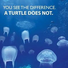 plastic bags and turtles - Google Search