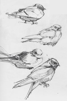 Fabulous Drawing On Creativity Ideas. Captivating Drawing On Creativity Ideas. Bird Drawings, Animal Drawings, Pencil Drawings, Drawing Birds, Nature Drawing, Animal Sketches, Drawing Sketches, Sketching, Anatomy Sketches