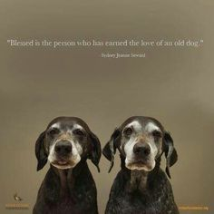 I love my dog Love My Dog, Puppy Love, Miss My Dog, Animals And Pets, Cute Animals, Nature Animals, Wild Animals, German Shorthaired Pointer, Dog Rules