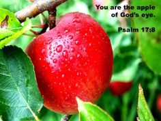 The Game Plan for Dealing with Depression: You are the Apple of God's Eye