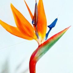 bird of paradise flower- work in progress - Cake by Cata's Cakes