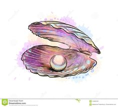 Illustration about Opened shell with pearl inside from a splash of watercolor, hand drawn sketch. Vector illustration of paints. Illustration of concept, fashion, graphic - 124061931 Shell Drawing, Life Drawing, Seashell Tattoos, Feather Tattoos, Nature Tattoos, Gcse Art Sketchbook, Sea Life Art, Pearl Paint, Seashell Painting