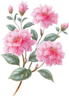garden favourites- Rob Pohl  538 x 746